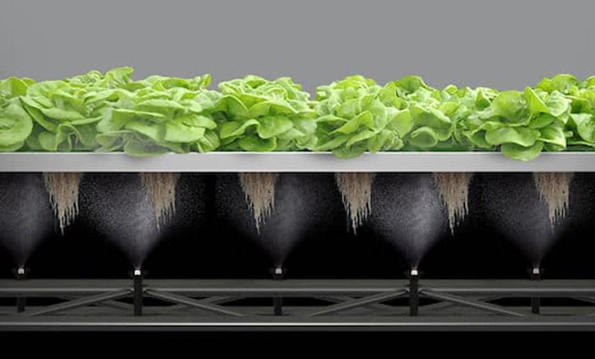 Clean Greens Agtech Agrifood tech Indoor Farming