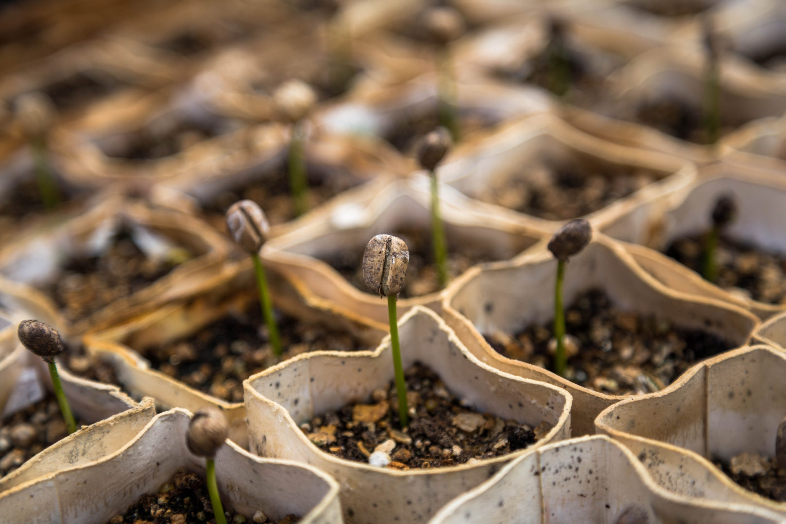 agrifood agtech foodtech investment venture capital