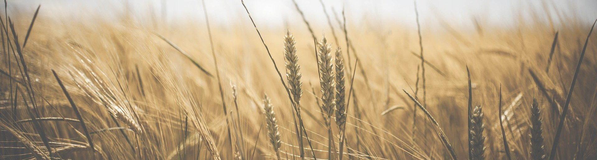 Agtech Foodtech Agrifoodtech agrifood innovation technology
